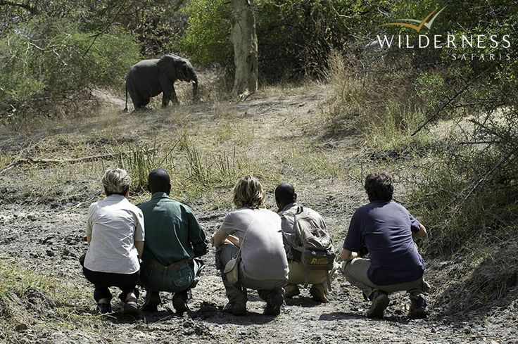 A morning or afternoon walk with an experienced guide means that you may find a porcupine, Dickinson's kestrel or inquisitive impala - not to mention elephant - on foot and away from the confines of a safari vehicle.