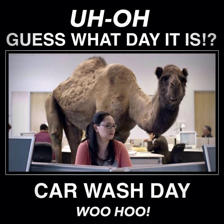 Happy #CarWash Day!