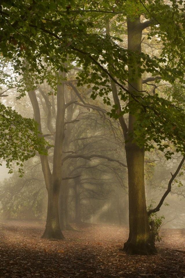 Brickhill woods , Milton Keynes . On a misty Autumn day .