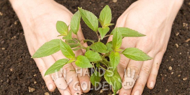 Натуральное органическое удобрение для растений