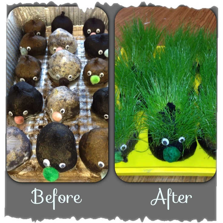 During our nature unit the kids made their own chia pets and then when the hair got long they gave themselves a haircut!