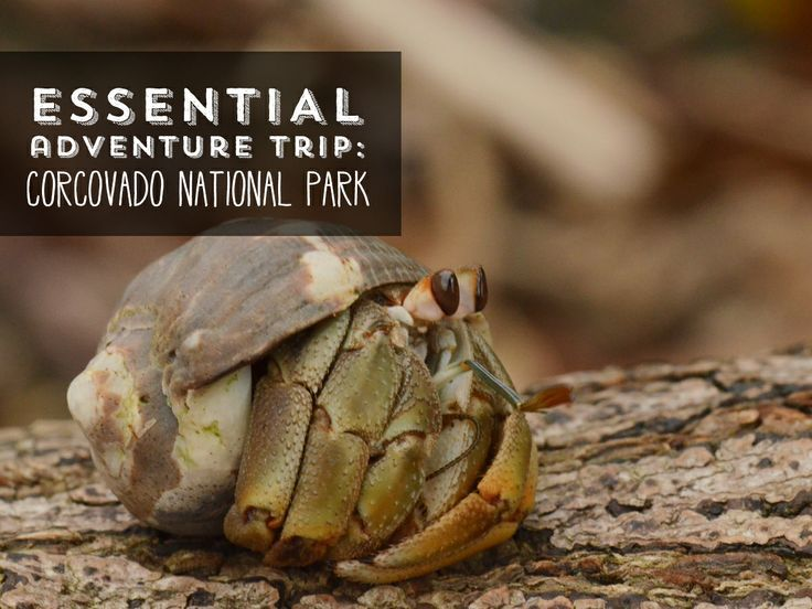 """Want an adventure you can't put a price on? Corcovado National Park has been called the planet's """"biologically richest place."""" #CostaRica #VisitCostaRica #travel #tourism"""