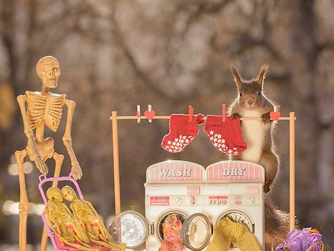 wild squirrels with a waching machine and skeleton