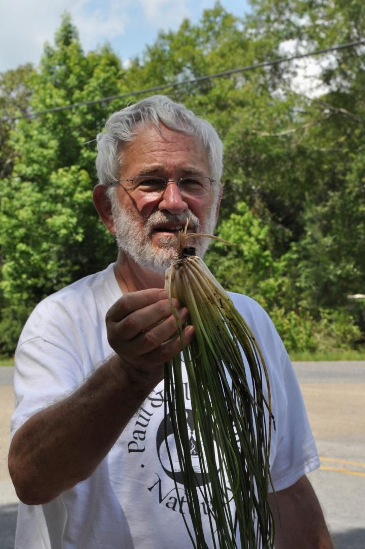 A new species of quillwort named for the US state of Mississippi