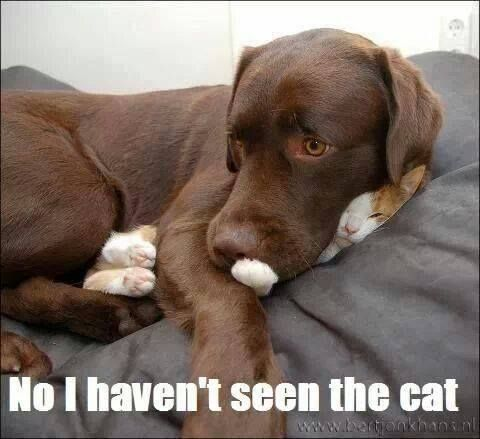 This is just like our Chocolate Lab with our cat! But they absolutely love each other.