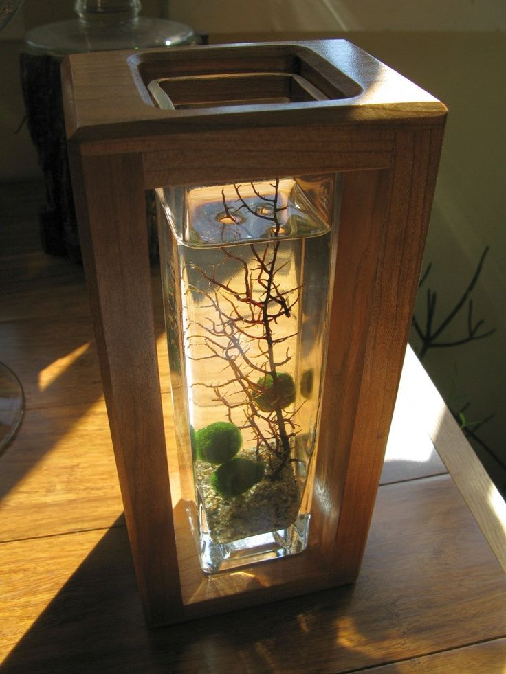 Marimo Shadowbox Aquarium. Super Hip Underwater Terrarium. $75.00, via Etsy.