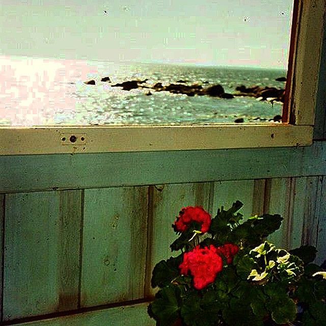 #iltapäivä #ikkuna#window#vessanikkuna#saaristo#kaunissaari#kaunissaarenmaja#kukka #flower #valo #light #Kotka #finland#suomi