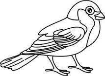 Image result for gorrion dibujo