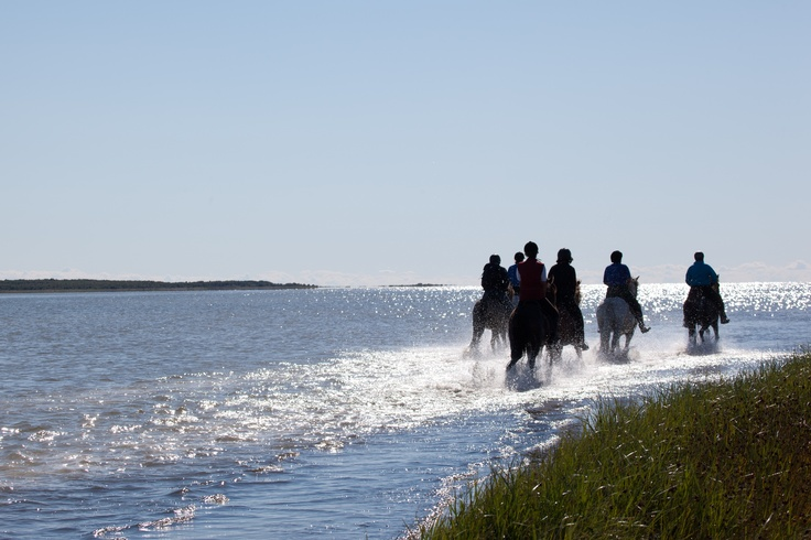 Riding the horses at Læsø in Denmark #fun #travel #denmark #horses #hobby