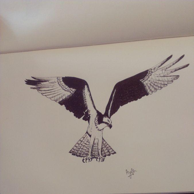 Day 22 #100daysofdoodling by Ayla Paul: Osprey (Visarend)