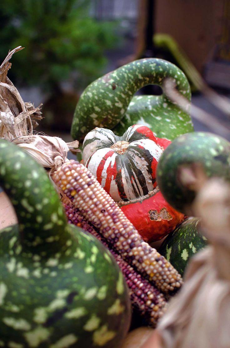 Union Square Greenmarket NYC | heneedsfood.com