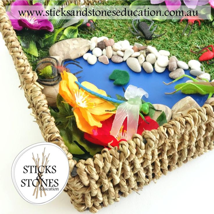 SSE Insects Garden in a Basket