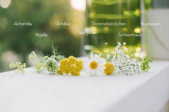 ber ideen zu gelbe blumen auf pinterest blumen sukkulenten und mehrj hrige pflanzen. Black Bedroom Furniture Sets. Home Design Ideas