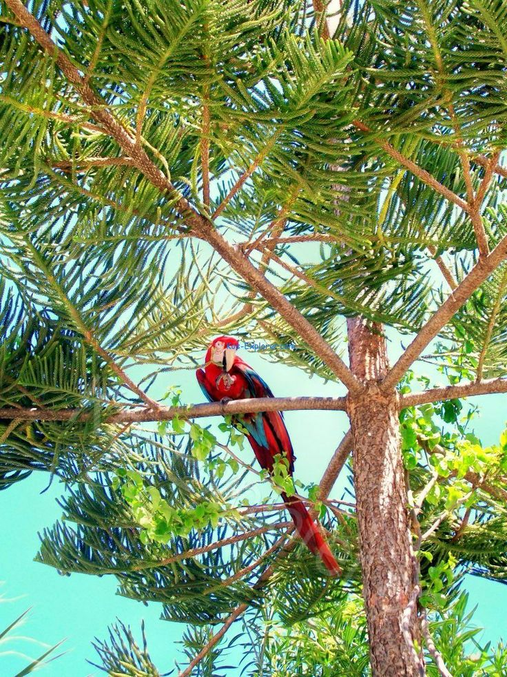 Beaches in Kos town have more than just soft sands and clear waters to offer! #parrot #nature #beach