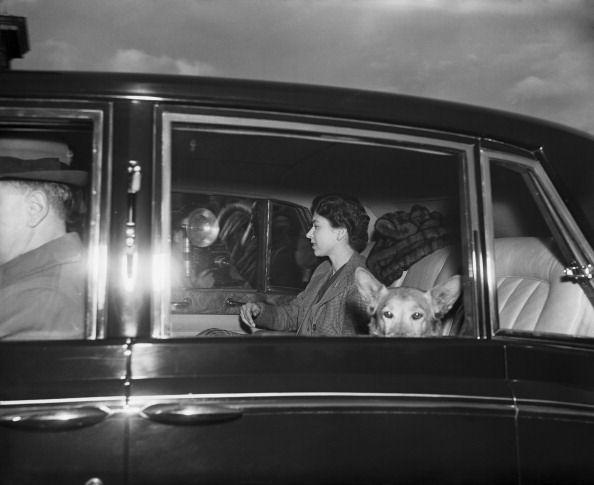 """REPORTAGE LES 90 ANS DE LA REINE ELISABETH II D'ANGLETERRE PREMIER DOSSIER """"LES CORGIS DE LA REINE """" - PRINCESS MONARCHY"""