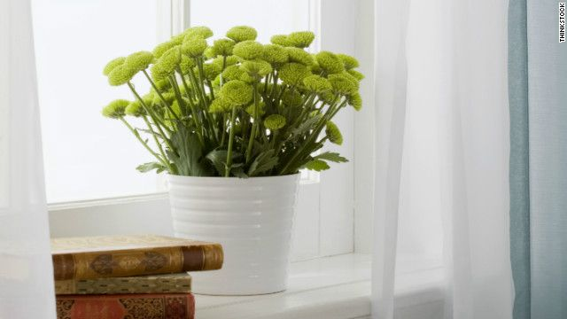 Guide to Indoor Gardening - now if only I didn't kill every plant I came in contact with...