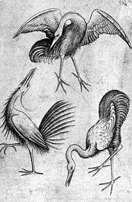 Fågler i religion, folklore och kultur. Fåglar spelar framträdande och skiftande roller i folklore, religion och kultur. Inom olika religioner fungera fåglar som budbärare eller präster, och ledare för en gudom, som i Makemakereligionen där Tangata manu på Påskön fungerade som hövdingar, eller som tjänare, som i fallet Hugin och Munin, två korpar som viskade nyheter i öronen på den nordiske guden Oden. De kan också fungera som religiösa symboler, som när Jona (hebreiska: יוֹנָה, duva)…
