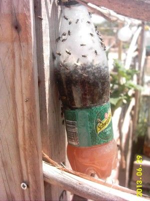 Got a fly problem when eating outdoors...  http://www.homesteadingfreedom.com/control-flies-outside-with-this-method-from-spain/