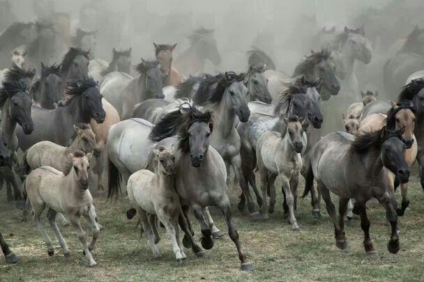 Rabid Horses In Germany! - 608×405