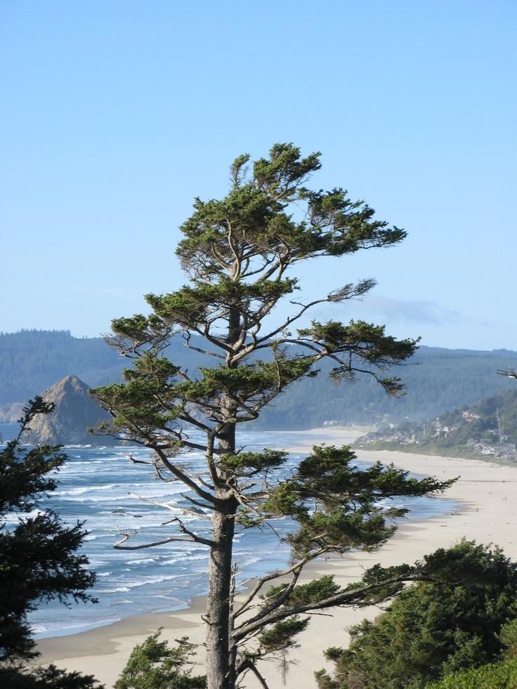 Oregon Coast  http://www.oregonbeachvacations.com/