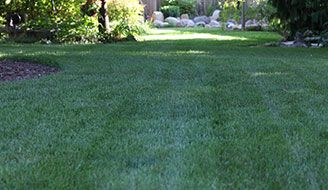 Learn the best times and methods to reseed your lawn. Reseeding is a quick and cheap way to bring your lawn back to its lush green and healthy self.