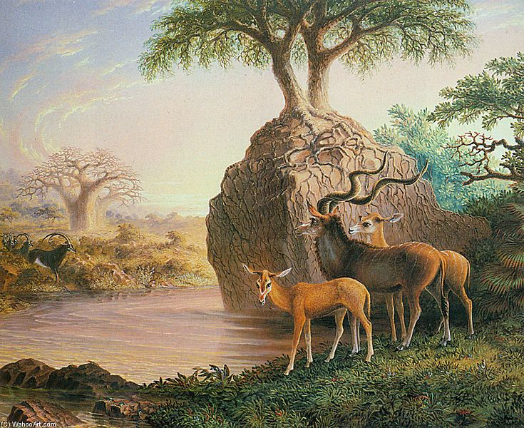 Koodos, Luisi rivière, vallée du Zambèze de Thomas Baines (1820-1875, United Kingdom)