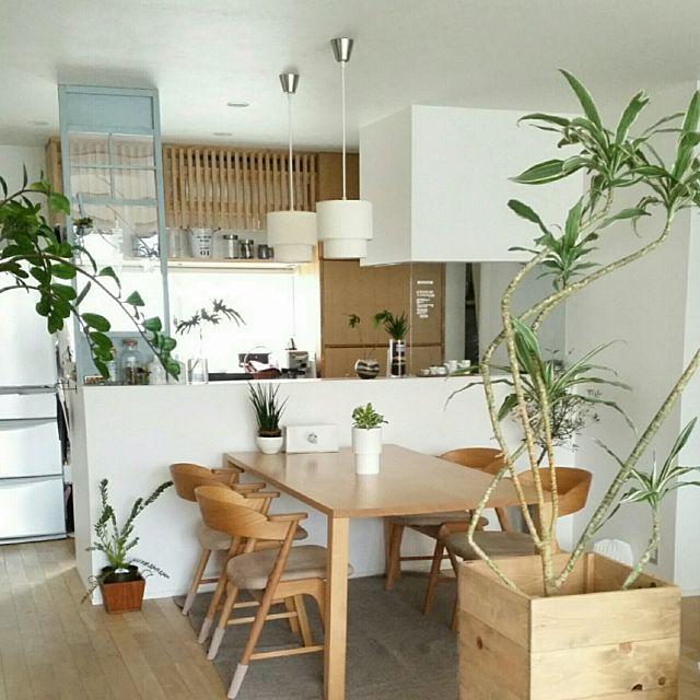 chieさんの、Kitchen,無印良品,ナチュラル,IKEA,ニトリ,シンプル,ナチュラルインテリア,造作家具,natural,ダイニングテーブル&チェア,観葉植物 ,MoMonatural,シンプルインテリア,グリーンのある暮らし,パーテーションDIYについての部屋写真