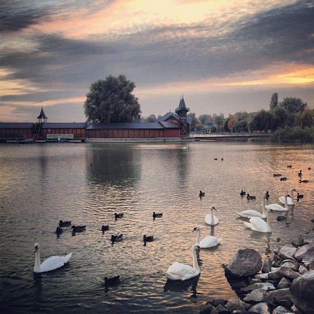 Hungary: Heviz: Heviz-Balaton Lake, volcanic heated water, mineral water
