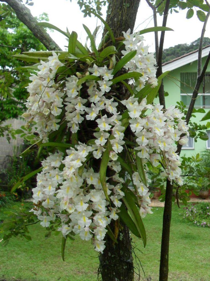 Resultado de imagen para nutricion orquidea