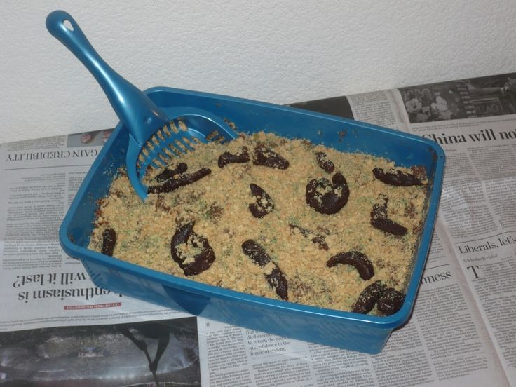 Kitty Litter Cake...great for HALLOWEEN or birthday party!