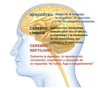 por Salomé Altimira Herce    En esencia, el cerebro humano consta de tres formaciones o cerebros independientes. Cada uno de estos cerebr...