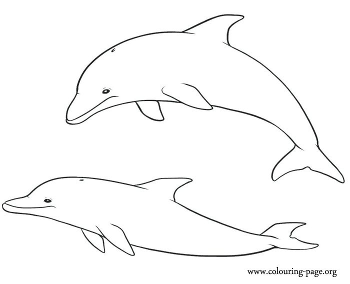 Dolphin Coloring Pages Pdf : Dolphin printables coloring pages printable