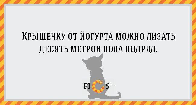 20 открыток с истинными мыслями котов - Pics.Ru