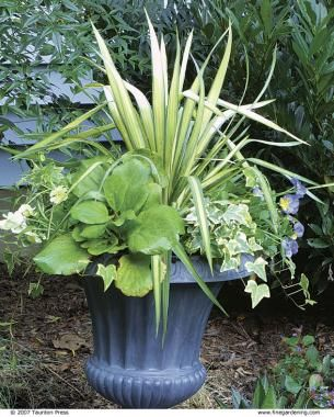 25 Best Ideas About Winter Container Gardening On Pinterest Winter Planter Fall Potted