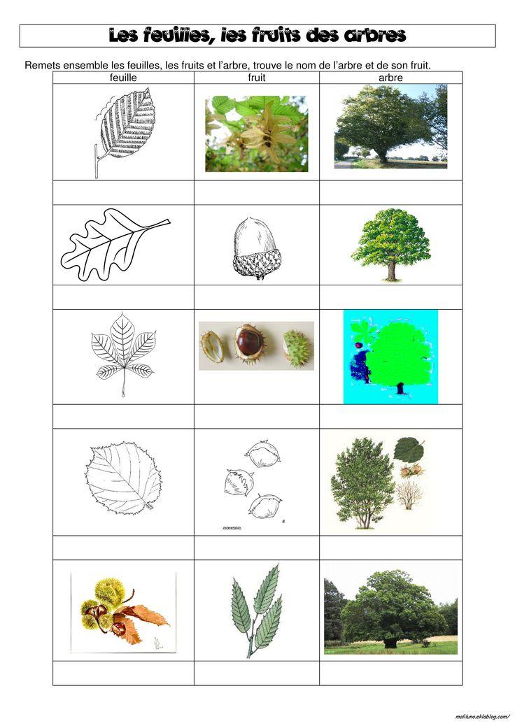 DDM : les feuilles, les fruits et les arbres de notre bois - Chez Maliluno                                                                                                                                                                                 More