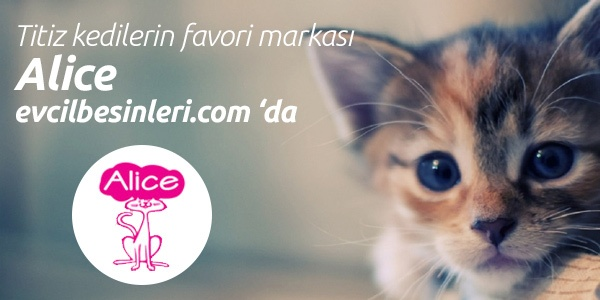 Titiz kedilerin favori markası Alice Evcilbesinleri.com da