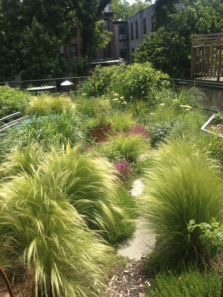 233 best images about ornamental grasses on pinterest for Top ornamental grasses