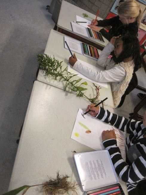 Leerlingen van groep 3 van #Hartenaas volgen de workshop Teken een plant na van Hans Huizing ikv #Jeelo-project Omgaan met natuur https://plus.google.com/photos/102601573144266356933/albums/6064539636957400273?authkey=CISjwbal9eKNEQ …Jeelo Project 'Omgaan met natuur': 418 Workshop Teken een plant na.