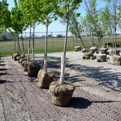 Top 5 Tips for Tree Selection and Planting http://stillmanstreeservice.com/blog/top-5-tips-for-tree-selection-and-planting  #BradentonTreeServices #SarasotaTreeServices
