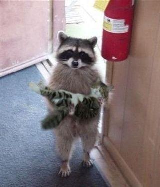 Did Someone Lose a Cat??