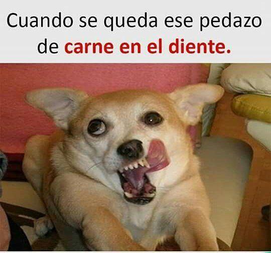 Lo Jj Jj Lo Memes De Animales Divertidos Memes De Perros Chistosos Memes Chistosisimos