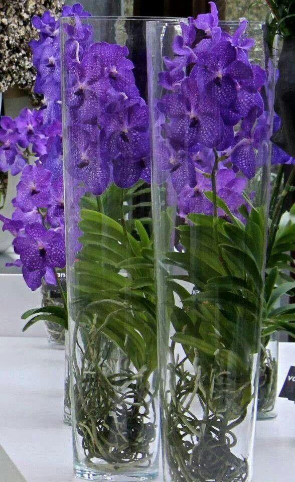 Blue Vanda orchids in glass vases
