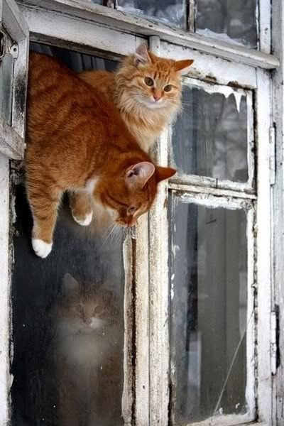 We gotta get outta here!: Artists, Orange Cat, Tabby Cat, Gingers Kittens, Window Panes, The Great Escape, Gingers Cat, Kitty, Animal