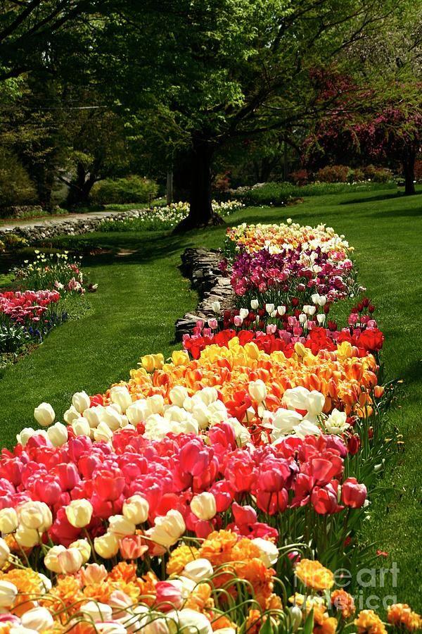 47 Best Flower Farm Images On Pinterest Cut Flowers