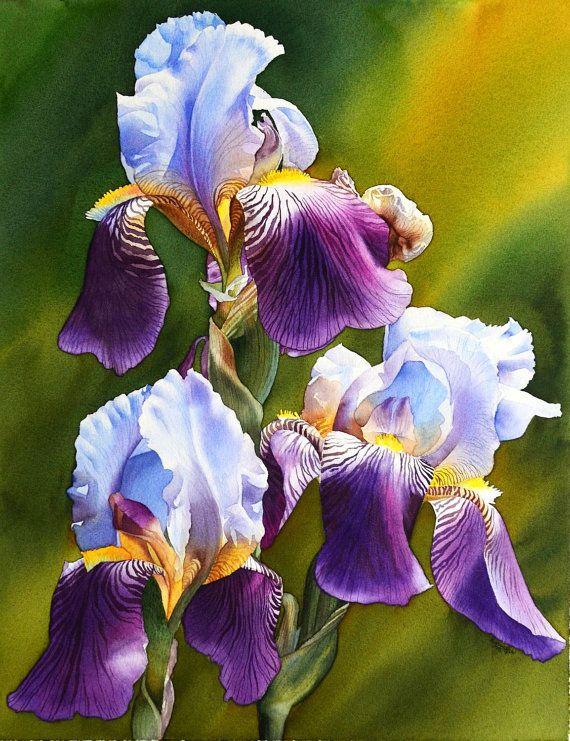 Słoneczny Iris, oryginalny obraz akwarela, piękne kwiaty, akwarela kwiat, irys akwarela, dzieł sztuki, oryginalne dzieła sztuki, EsperoArt.