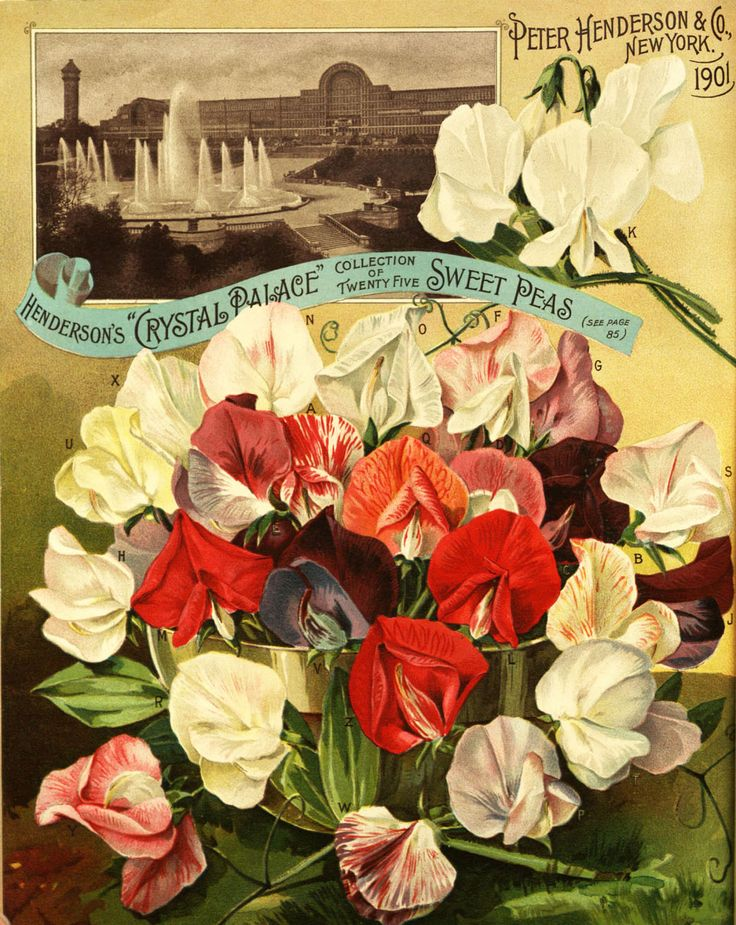 """From the collection at Andersen Horticultural Library. Nursery publications often showcase exhibits from recent world's fairs and other horticultural exhibitions. Peter Henderson & Co.'s seed catalog from 1901 depicts landscaping at the famed """"Crystal Palace"""" of Victorian London."""