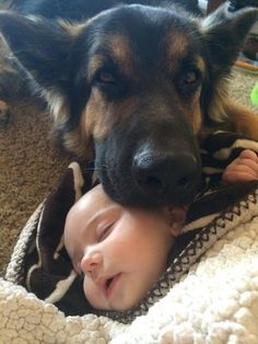 19 Reasons German Shepherds Are Actually The Worst Dogs To Live With - GSD little kid protection