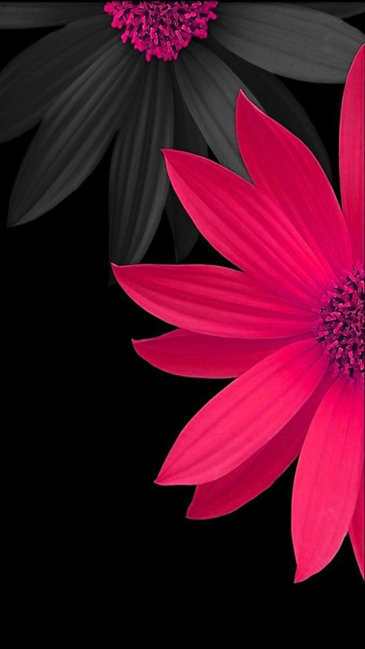 #pink #black #flower #wallpaper #background