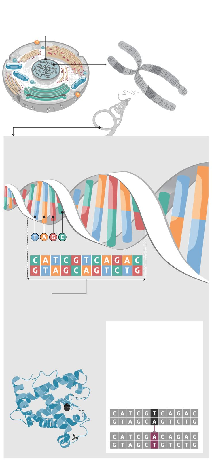 The Personal Genome Project was supposed to revolutionize medicine, but the results reveal how much we still have to learn. Carolyn Abraham looks at the risk of misleading results as DNA testing enters mainstream medicine