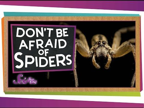 Don't Be Afraid of Spiders! - YouTube
